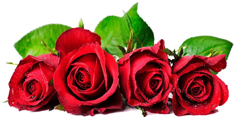 فال گل با تفسیر کامل انواع گل و تعداد شاخه ها